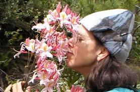 Wild Western Azaleas and Julie co-mingling